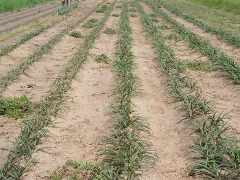 炭循農法.jpg